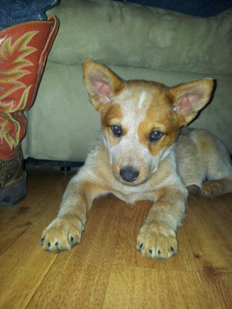 A Dog Named Zoey